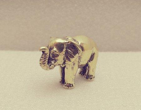 Слон вульгарис